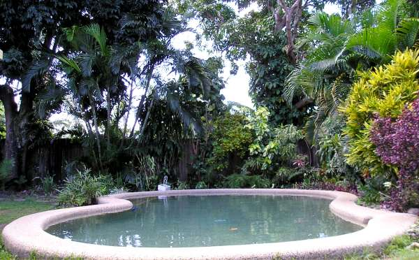 The Above Pictures Show A Good Example Of Relatively Low Maintenance Tropical Pool Garden While There Is Plenty Leafy Foliage And Colour